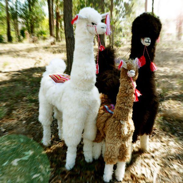 Giant Llama - Stuffed alpaca toy